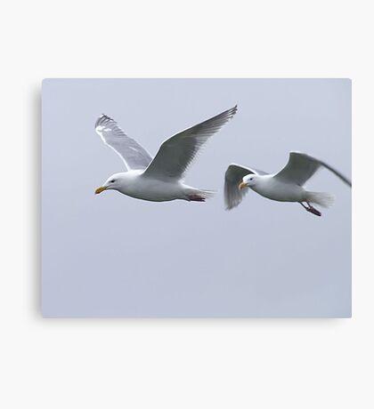 Gulls in a Storm (5) Canvas Print
