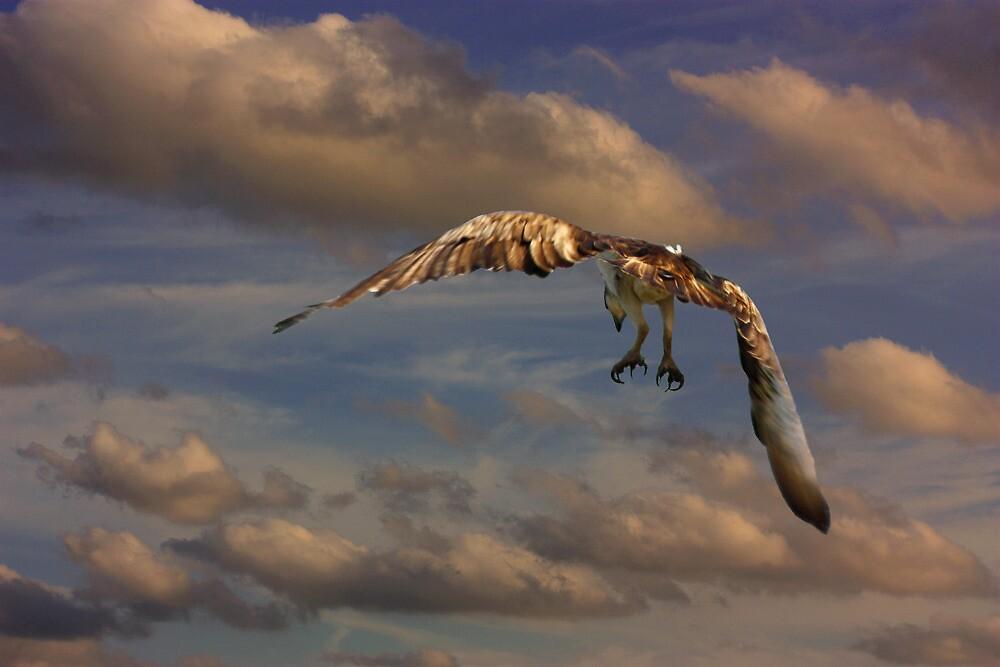 The Osprey Landing Pattern by byronbackyard