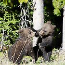 Baby Grizzly Bears by Crystal Wightman