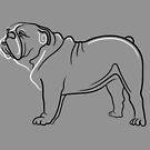 Bulldog Line Drawing by Adam Regester