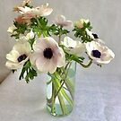 White Anemoness by Barbara Wyeth