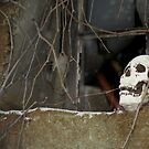 Skull in a Tangled Window by Wayne King