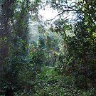 Harrington Rainforest by Graham E Mewburn