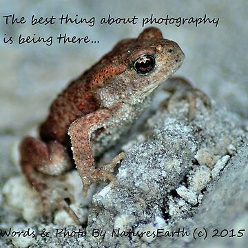 'Frog' by NaturesEarth