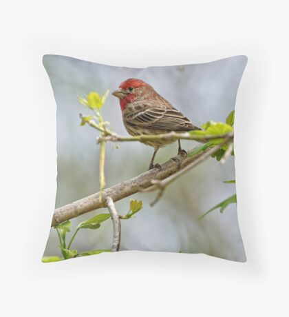 House Finch - Ottawa, Ontario Throw Pillow