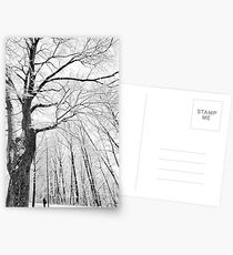 Under the Winter Canopy Postcards