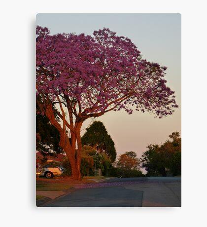 Jacaranda at sunset Canvas Print