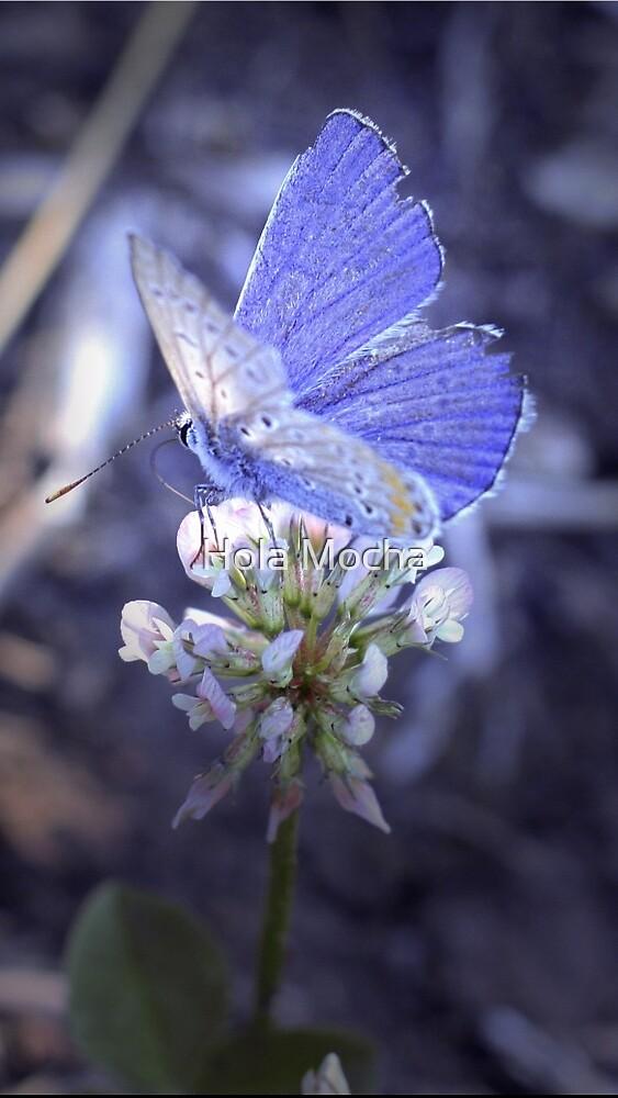 Little Butterfly by DarioRigon