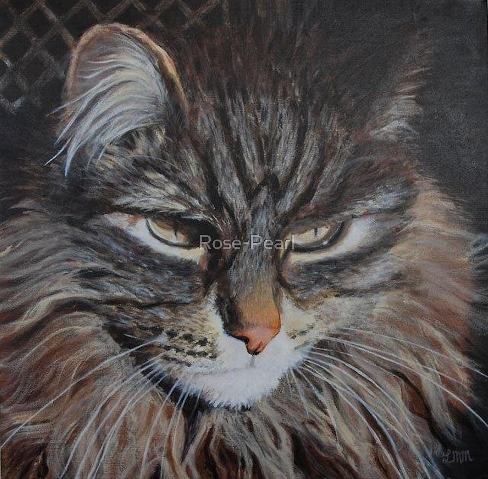 Monty the Norwegian Forest Cat by Rose-Pearl
