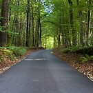 Forest road by Wildcat123