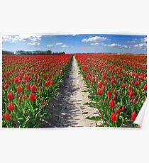 Tulips on Flakkee Poster