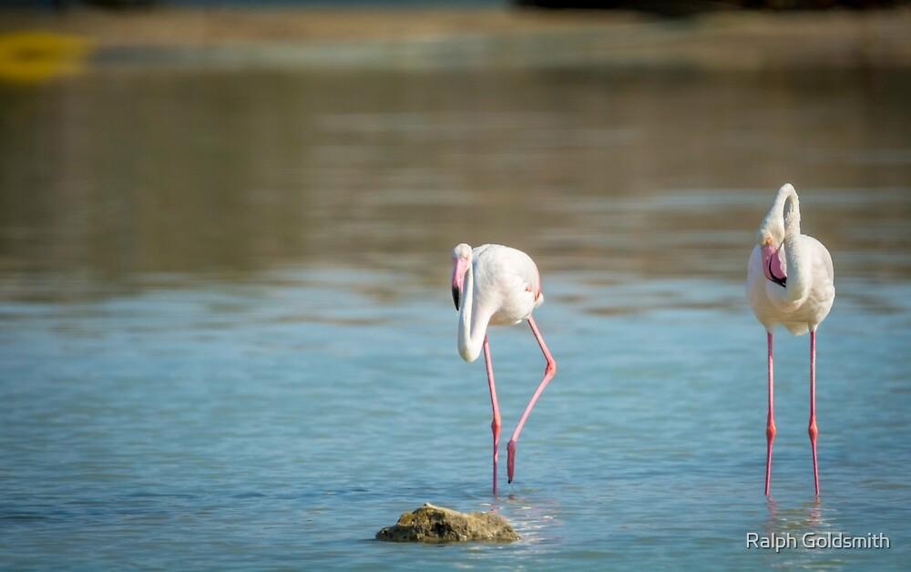 Pretty Flamingos by Ralph Goldsmith