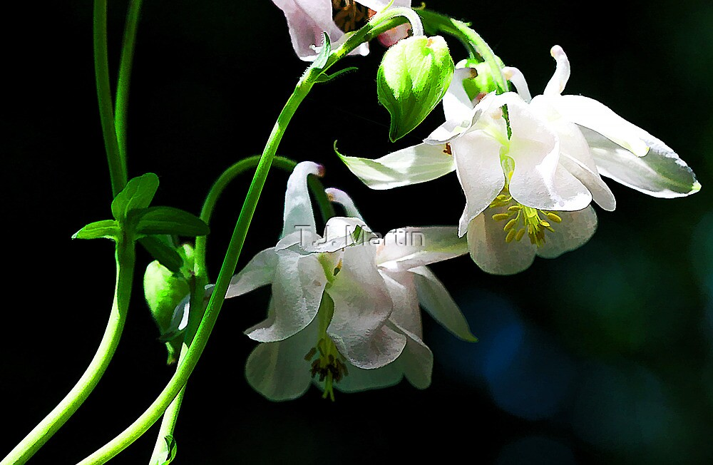 White Columbine - The Shade Garden by T.J. Martin