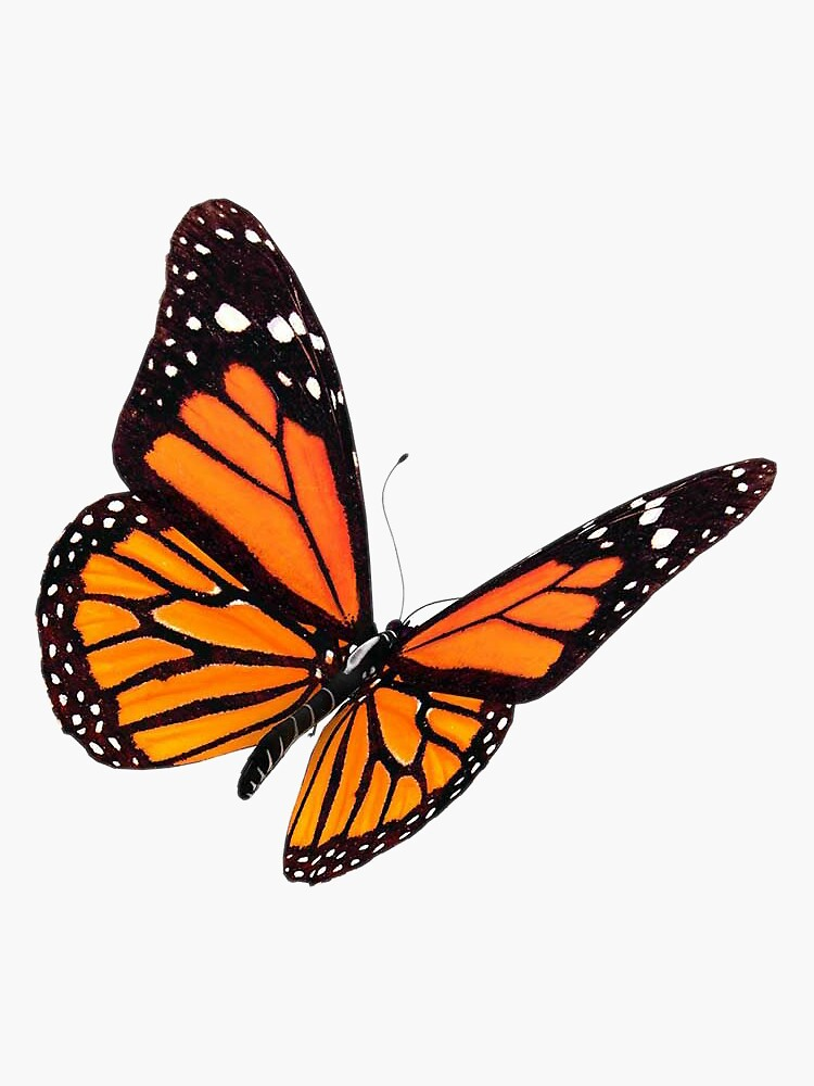 Monarch Butterfly  by EmmaGSheehan