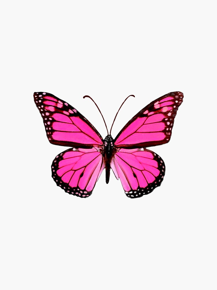 Hot Pink Butterfly  by EmmaGSheehan