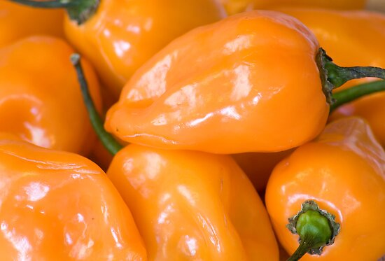 Habanero Peppers by richhillphoto
