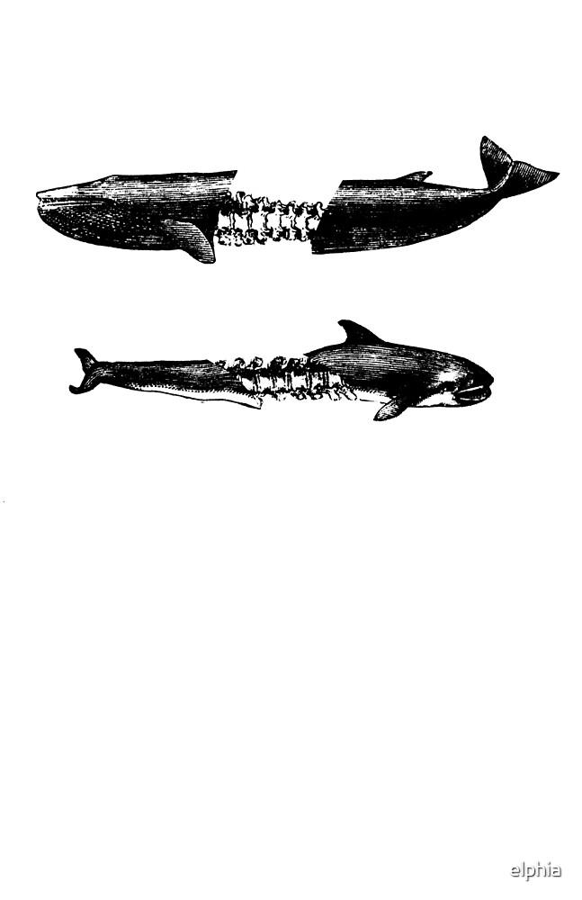 Dead Whales by elphia