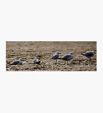 Seagulls Inline Photographic Print