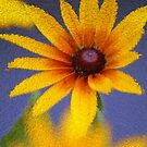 Sunburst by Chappy