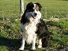Laddie, Mans Best Friend. by Michael Haslam