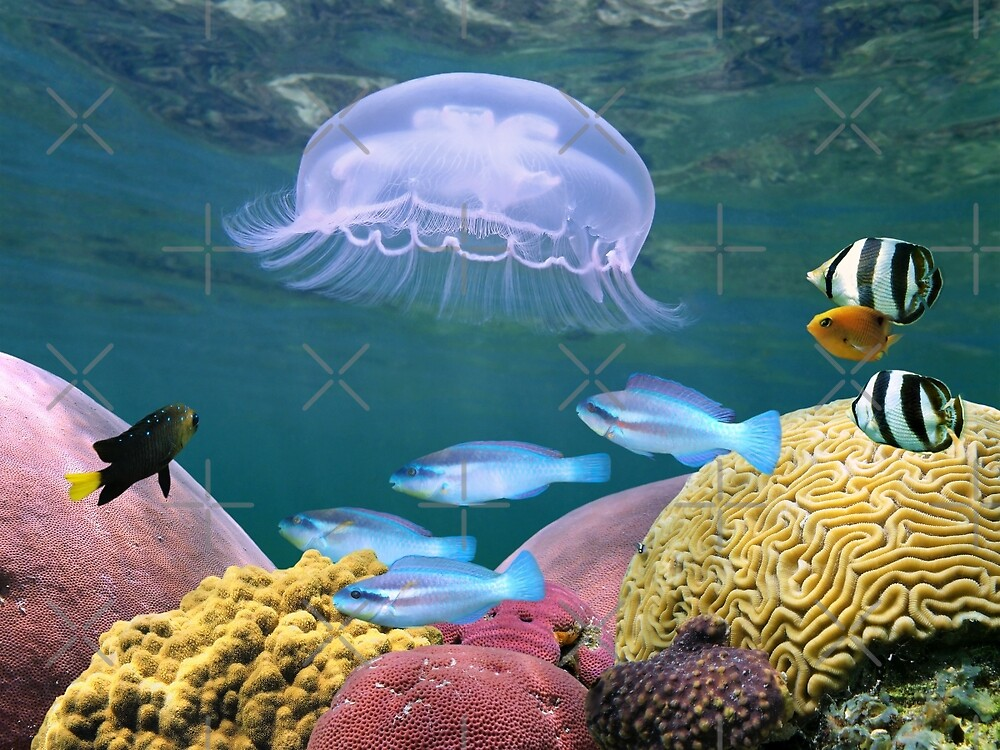 Jellyfish with colorful fish and corals by Dam - www.seaphotoart.com