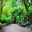 Ancient Rainforest  by Clive