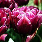 Powerfully Purple by Jack McCallum