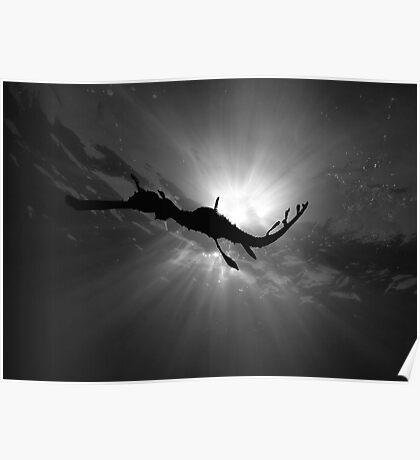 Seadragon & Sunlight Poster