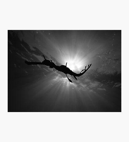 Seadragon & Sunlight Photographic Print