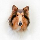 Collie by Crystal Wightman
