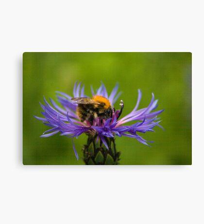 Bee on Flower Canvas Print