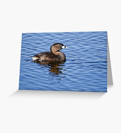 Pied Billed Grebe - Ottawa, Ontario Greeting Card