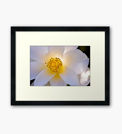 Buttery Glow Framed Print
