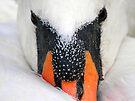 Mute Swan by Stuart Robertson Reynolds