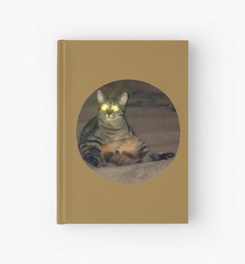 Coco the extraterrestrial kitten. by Martin Boisvert