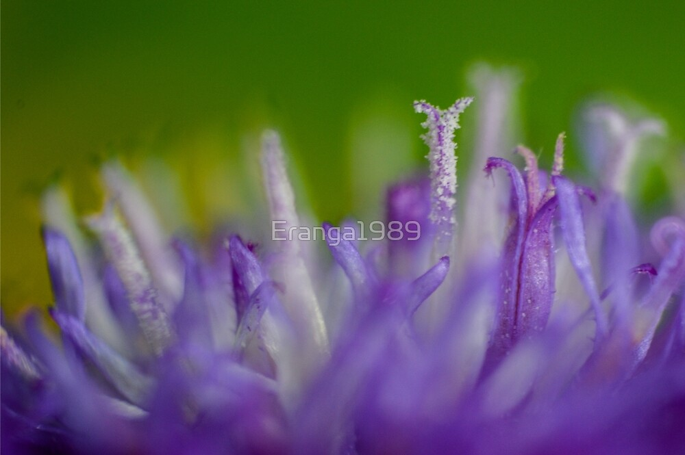Pollens - Macro by Eranga1989