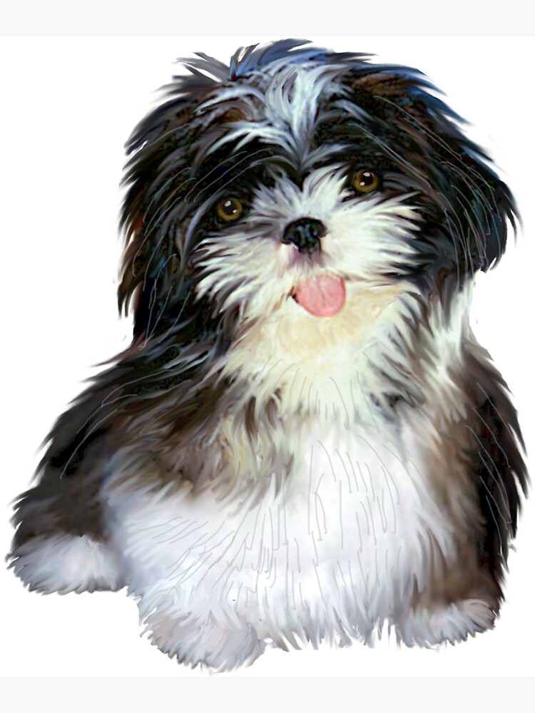 Shih Tzu Puppy (black and white) by JeanBFitzgerald