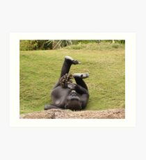 Gorilla Enrichment Art Print