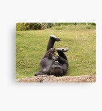 Gorilla Enrichment Canvas Print