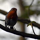 Robin Red Breast by Niamh Harmon