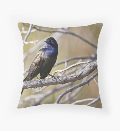 Common Grackle - Ottawa, Ontario Throw Pillow