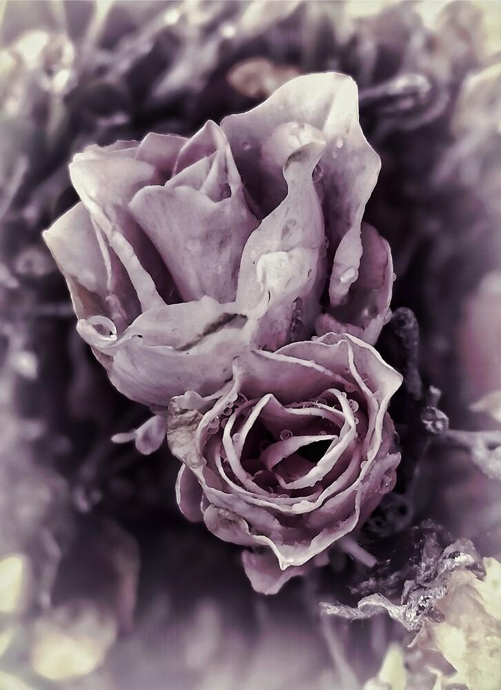 Purple Elegance by photosbypamela