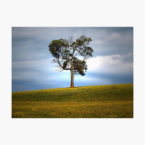 Solitude standing... Photographic Print