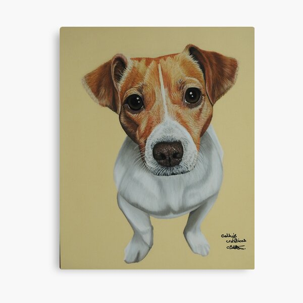 Sky the Jack Russell Terrier Canvas Print