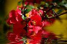 Red Passion by Vicki Pelham