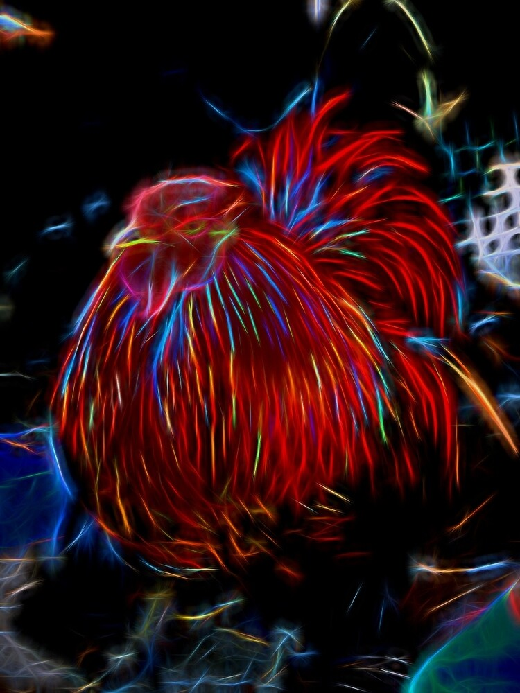 Glowing Rooster by photosbypamela