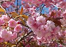 Spring Pink by Elaine  Manley