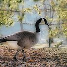 A Walk in the Park by shutterbug2010