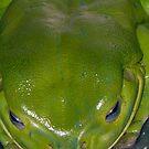 Green Freddo! by D. D.AMO