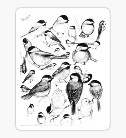 Chickadee Study Sticker